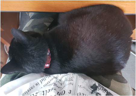 ヒザの上で寝る猫の写真