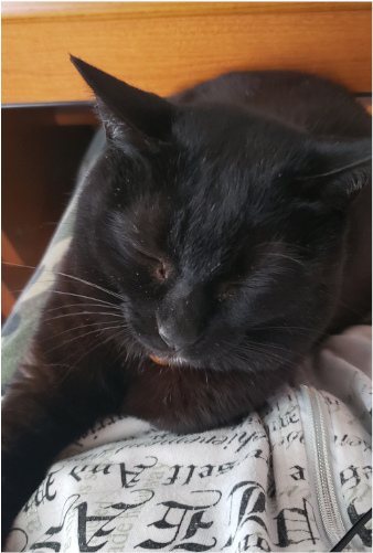 ヒザの上で寝る猫の写真2