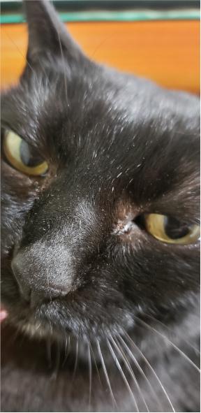ヒザの上に乗る猫の写真3