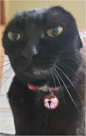 耳をペタッとしている猫の写真