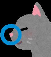猫の鼻のアップのイラスト