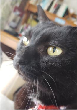 キリッとした猫の写真