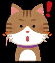 ヒゲで感知する猫のイラスト