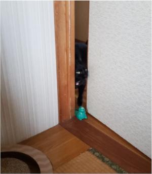 部屋へ入ってくる猫の写真