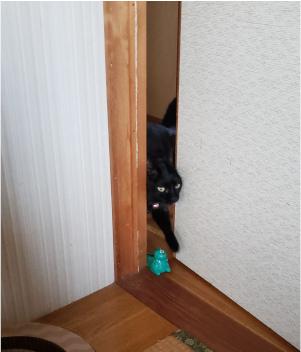 部屋へ入ってくる猫の写真2