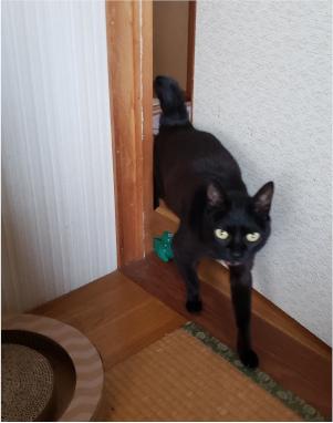 部屋へ入ってくる猫の写真3