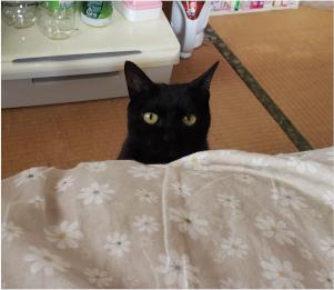 部屋へ入ってくる猫の写真4