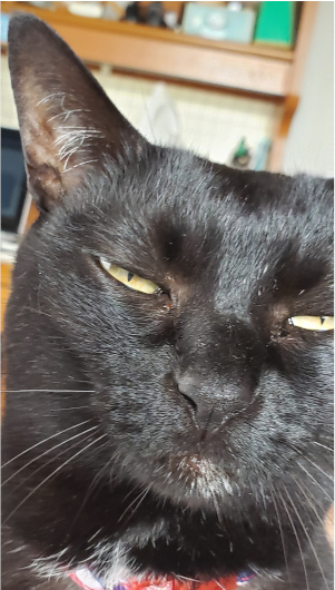 部屋へ入ってくる猫の写真5