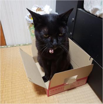 箱に入った猫の写真