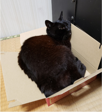 箱に寝転がる猫の写真