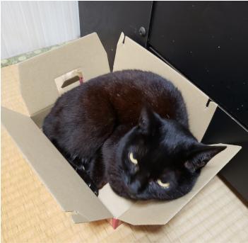 箱に寝転がる猫の写真2