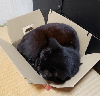箱に寝転がる猫の写真3