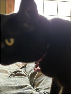 猫の画像3