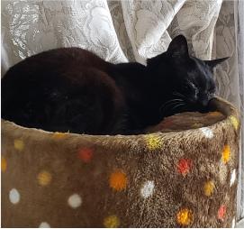 猫の画像4