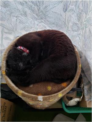 丸まる猫の写真