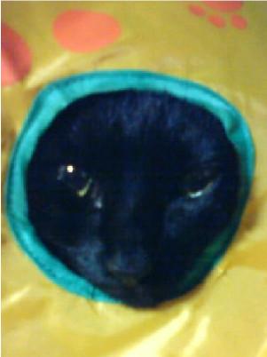 穴から顔を出す猫の写真