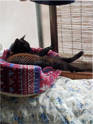 猫用ベッドで寝る猫の写真
