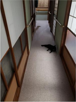 廊下で寝転がる猫の写真