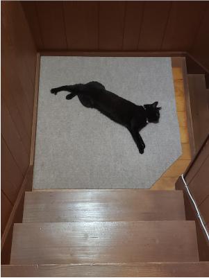 落ちてる猫の写真2