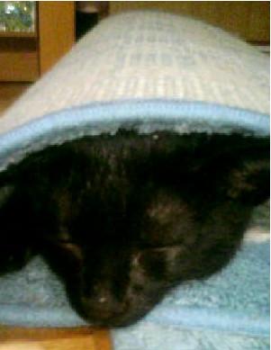 マットに包まって寝てる子猫の写真