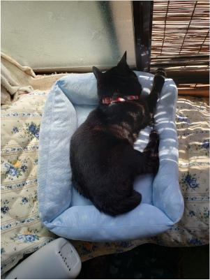 猫ベッドで寝る猫の写真
