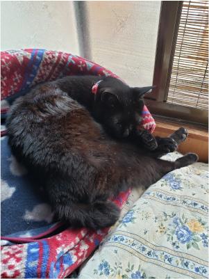 猫ベッドで寝る猫の写真2