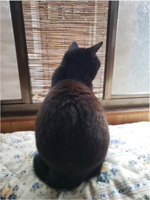 窓から外を見る猫の写真