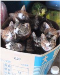 猫たちがぎゅうぎゅうになっている写真