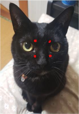 猫の顔にあるツボの画像