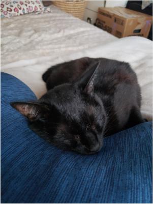 寝てる猫の写真