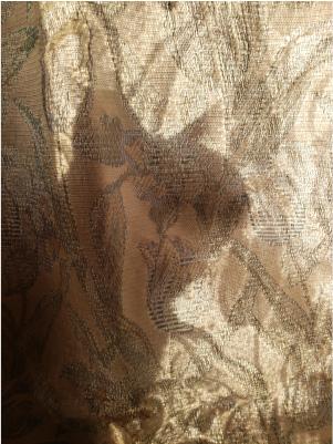 猫のシルエットの写真