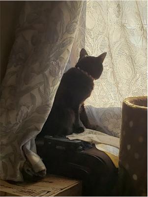 外を眺めようとする猫の写真