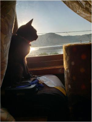 朝日に照らされる猫の写真