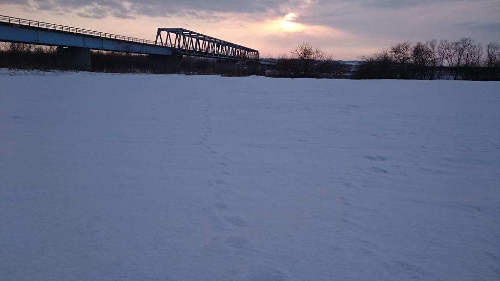 利別川河川敷。動物の足跡だらけ