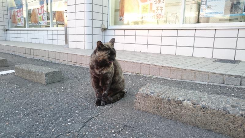 池田町商店街の猫,ローソン前