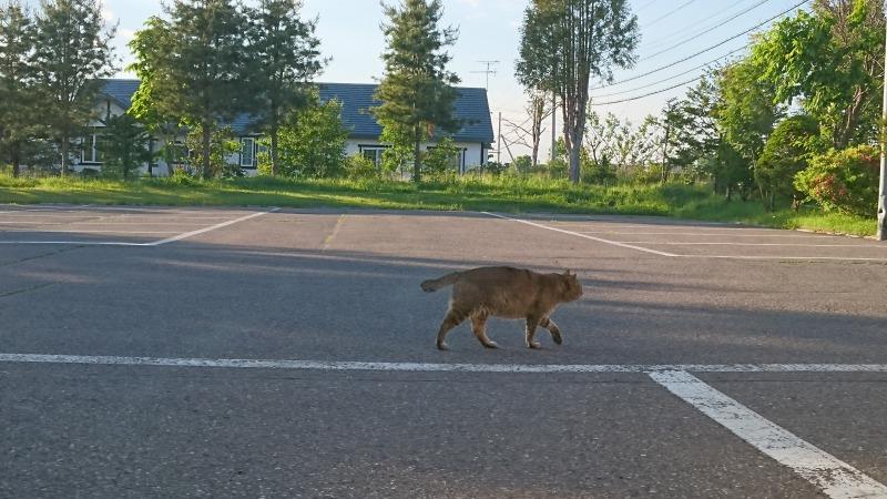 池田町商店街の猫,香味屋駐車場