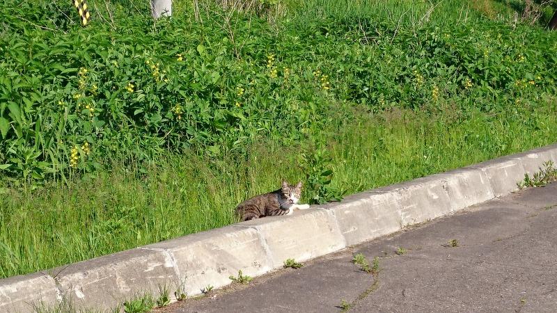 池田町商店街の猫,JR池田駅駐車場