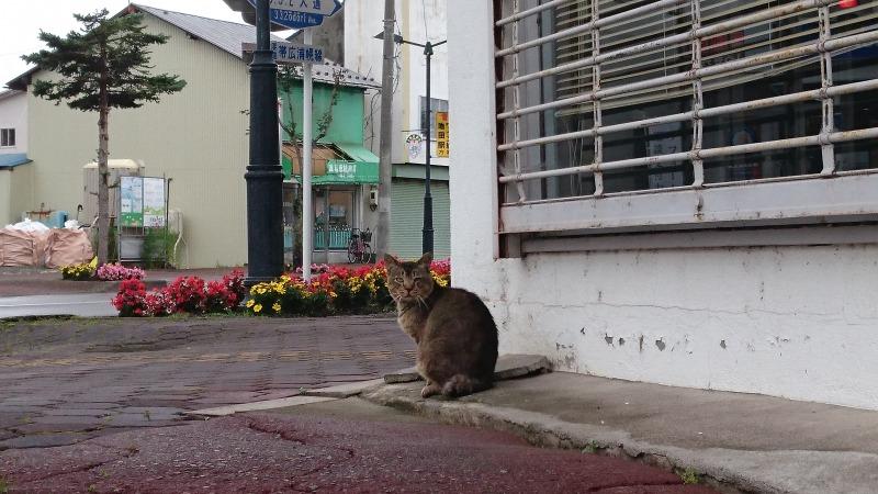 池田町商店街の猫,大通2丁目