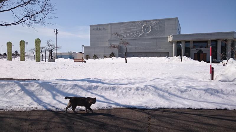 池田町の猫,田園ホール前