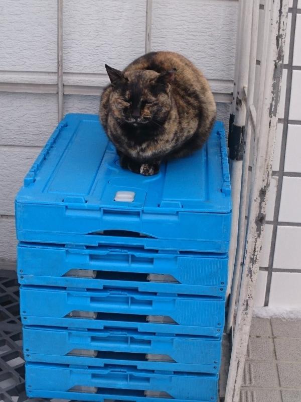 池田町商店街の猫,大通4丁目ローソン前