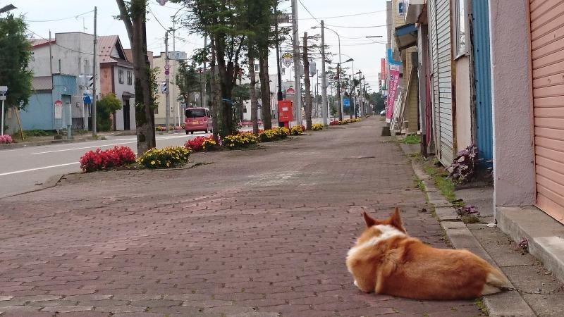 池田町RED POINTお隣の犬