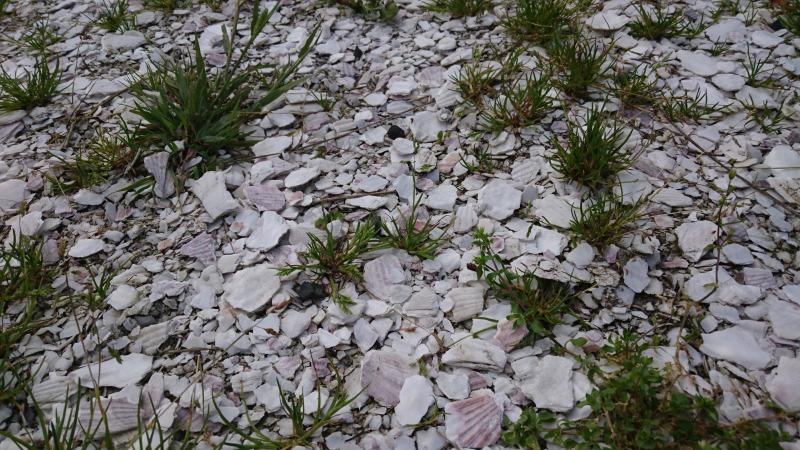 白い貝殻の道の正体