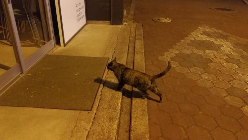 夜の池田町は人より猫が多い