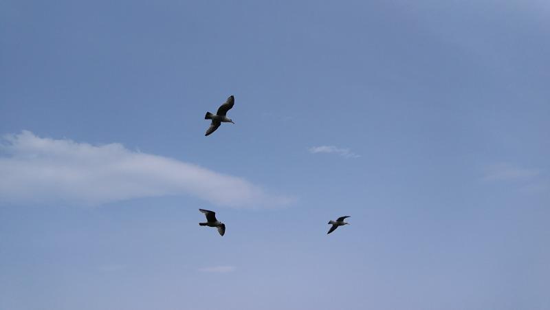 えりもの海をとぶ鳥