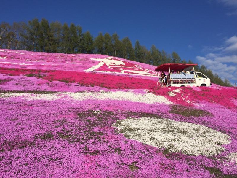 東藻琴の芝桜は必見(北海道網走群大空町)