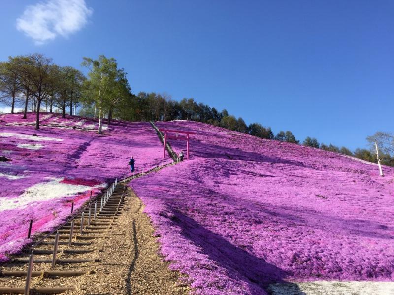 2017年東藻琴の芝桜(北海道網走群大空町)