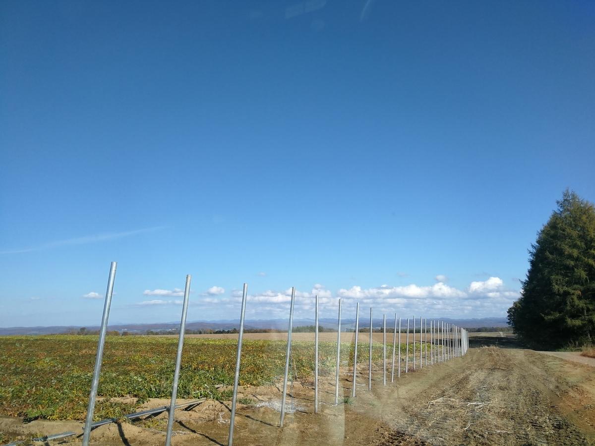 広い青空と長芋畑