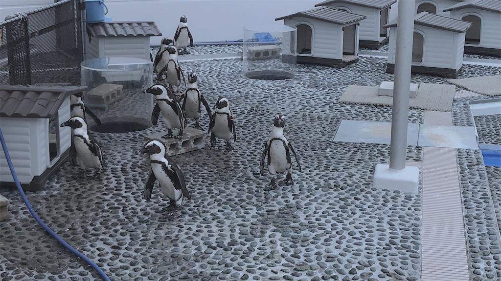 f:id:kurosawa07:20210214115838j:image