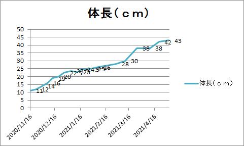 f:id:kurosawa07:20210522233003p:plain