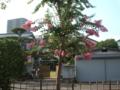 若宮西公園 花
